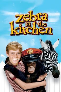 Zebra in the Kitchen